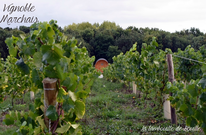 vignoble-Marchais-Thouaré-44