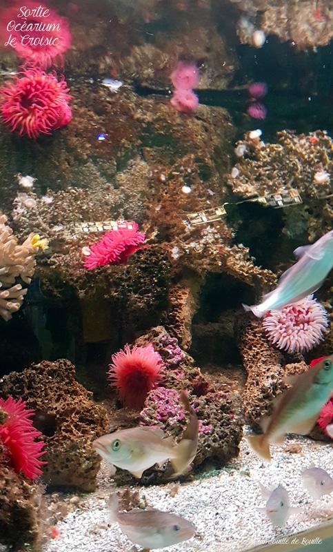 ocearium-lecroisic-loireatlantique-tourisme-famille