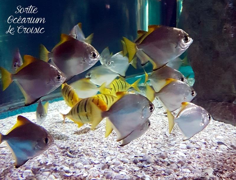 ocearium-croisic-loire-atlantique-44