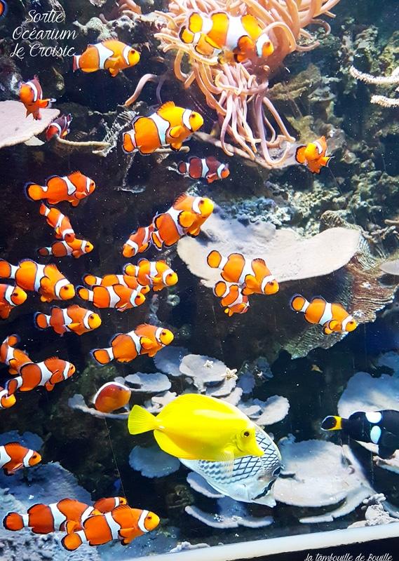 sortie-famille-ocearium-LeCroisic-44-loire-atlantique-Nemo