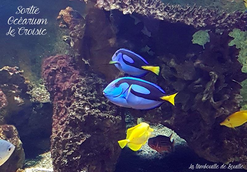 sortir-loire-atlantique-lecroisic-ocearium